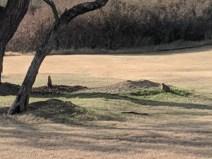 LAKE ARROWHEAD - PRAIRIE DOG TOWN