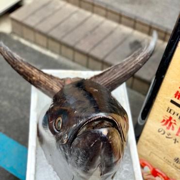 WTF, right? - scary fish?