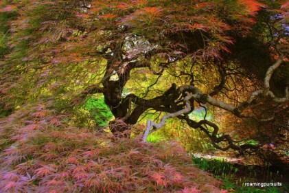 Travel Melbourne Photography Blog Cloudehill Garden_5