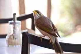 alice bird 2