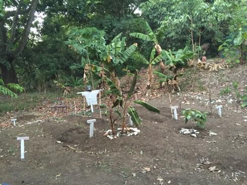 Peace Garden (Costa Rica Animal Rescue Centre)