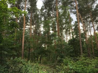 Berlin: Grunewald Forest