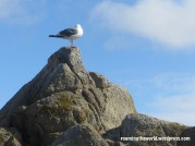 Seagulls in Paradise Grove