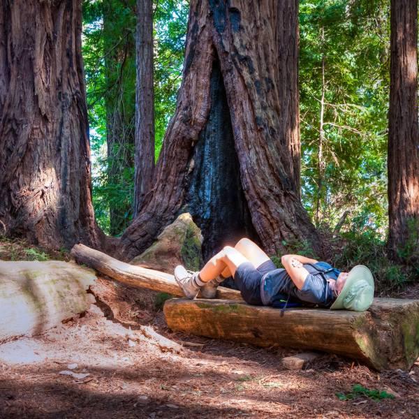 Redwood Relaxing