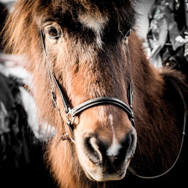 Leonberg Horse Market
