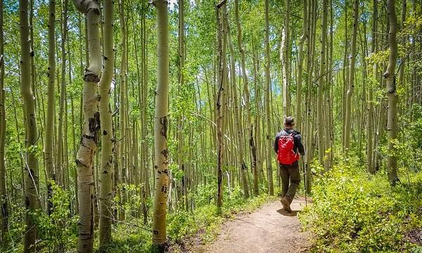 Lily Pond Trail