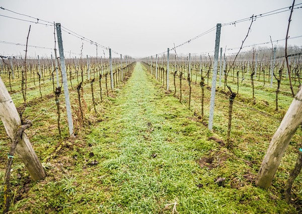 Freinsheim Wine Hike