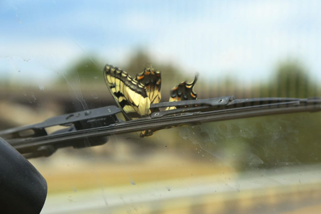A butterfly got caught in our windshield wiper ;(