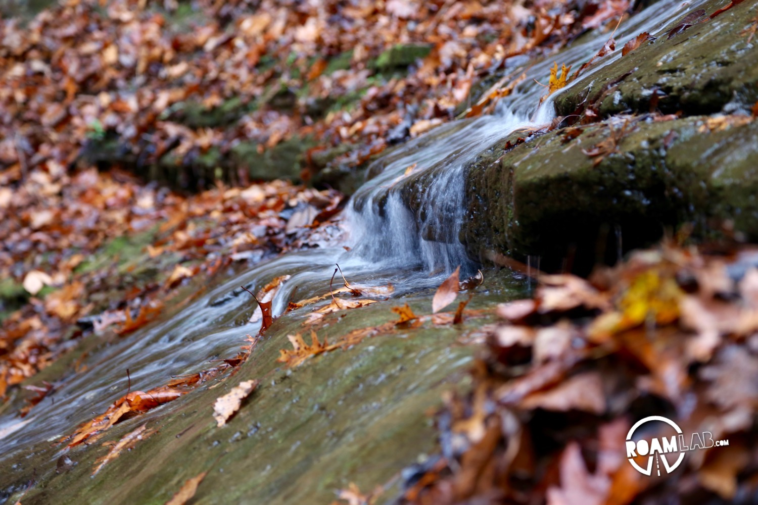 Jackson Falls is one of the iconic waterfalls along the Natchez Trace Parkway.