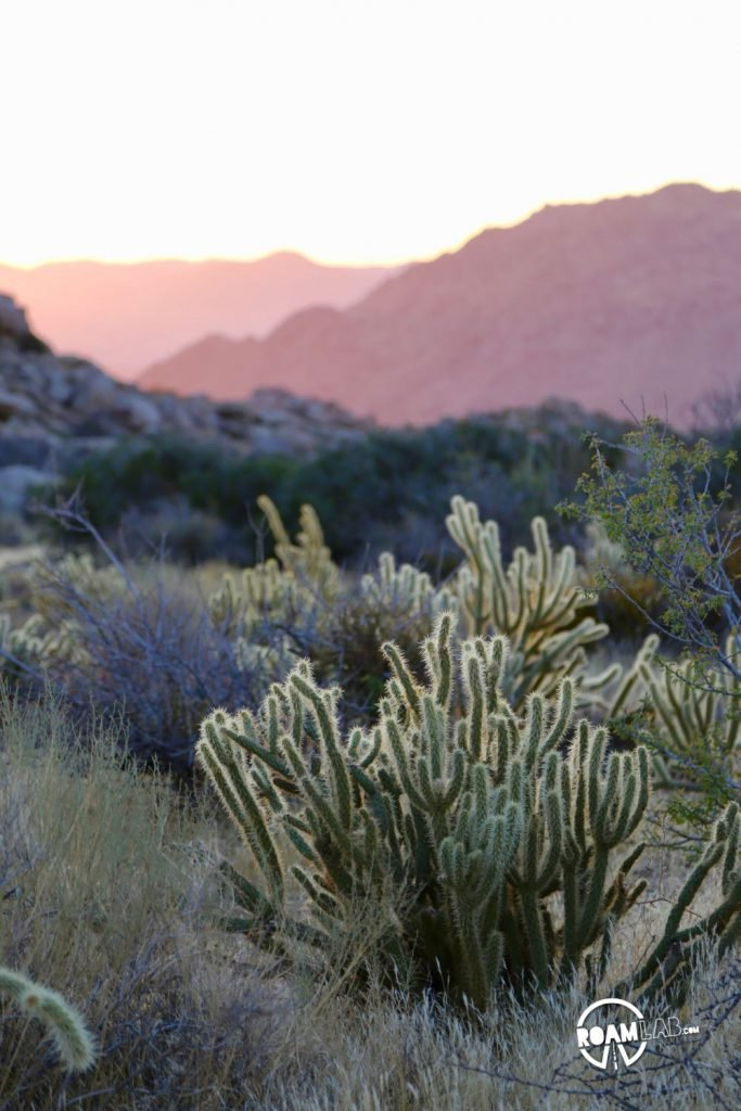 Shades of dawn in the Anza-Borrego Desert State Park.