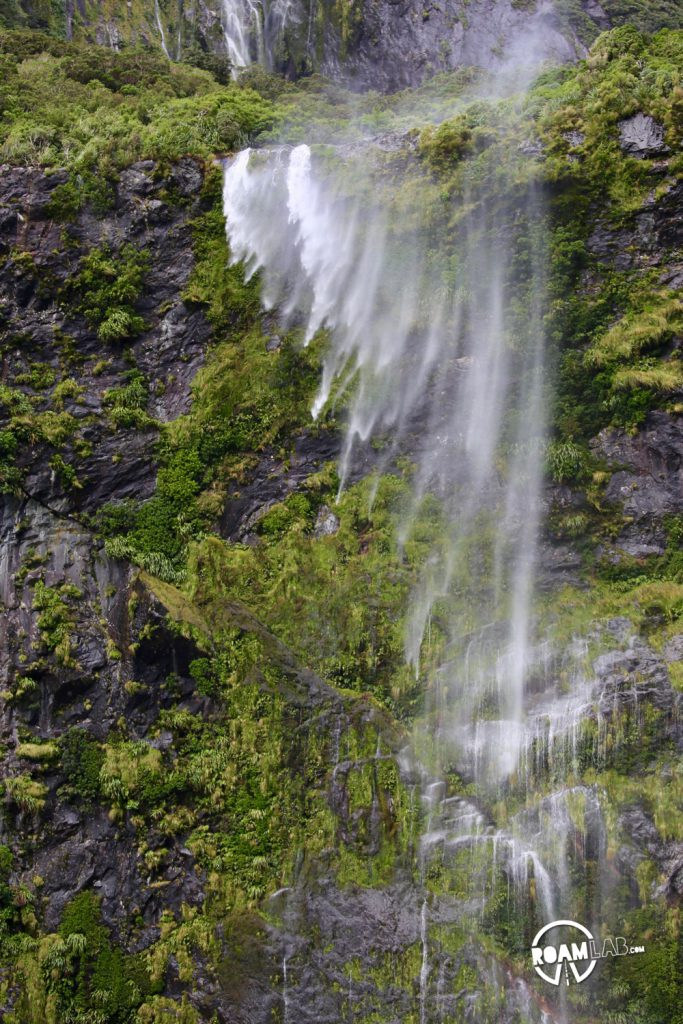 Discovering disappearing waterfalls, fur seals, black choral, alpine parrots, and mirror lakes, while hiking Milford Sound, New Zealand.