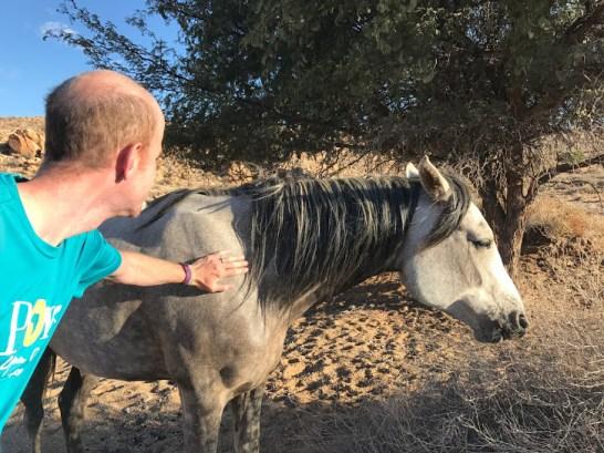 Matt and the semi-wild horse.