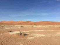 Surrounded by dunes.