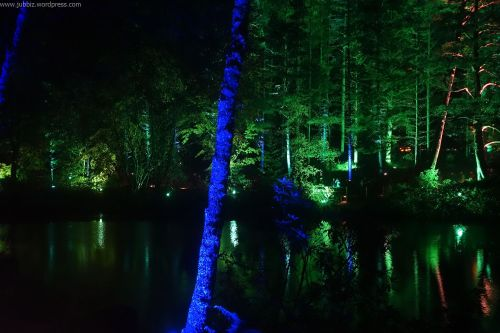 Enchanted Forest_11