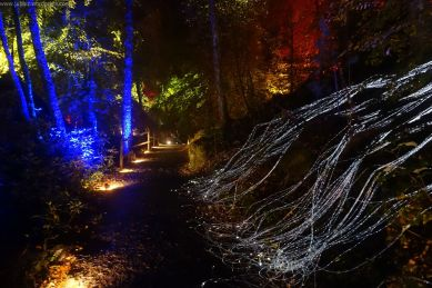 Enchanted Forest_14