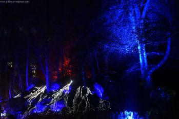 Enchanted Forest_26