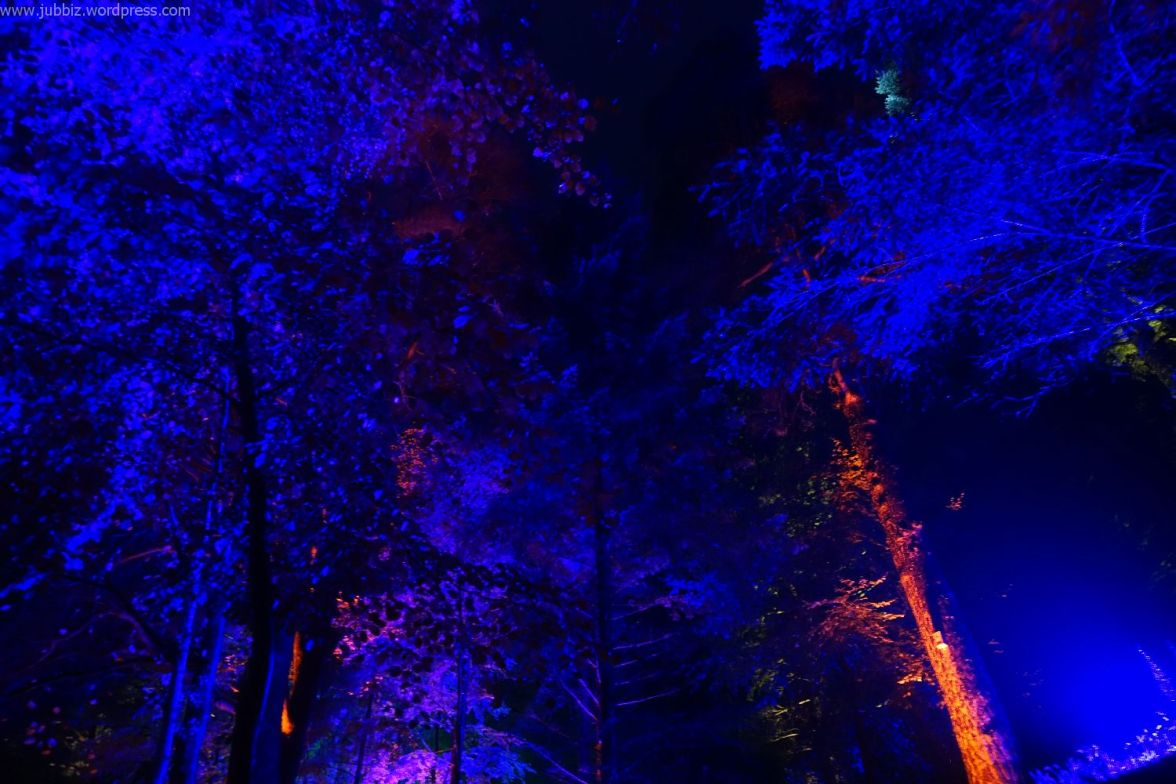 Enchanted Forest_28