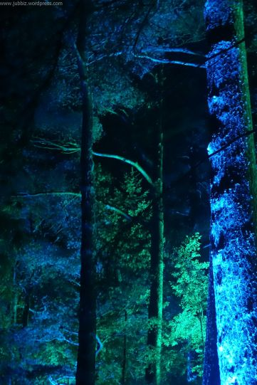 Enchanted Forest_30