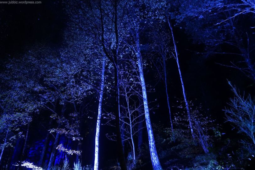 Enchanted Forest_35