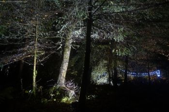 Enchanted Forest_46