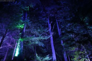 Enchanted Forest_49