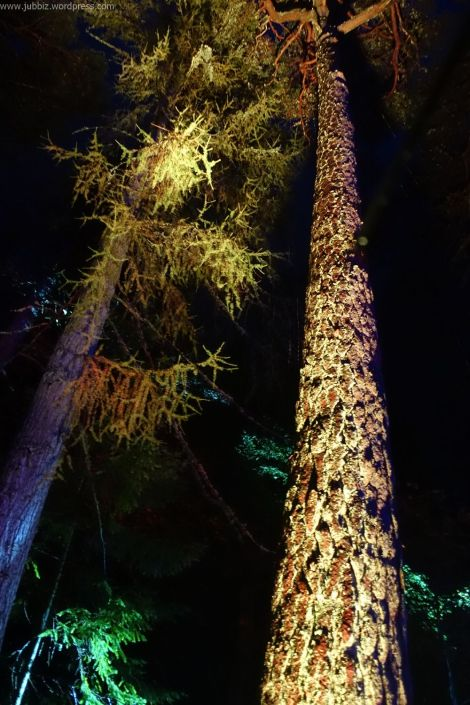 Enchanted Forest_62