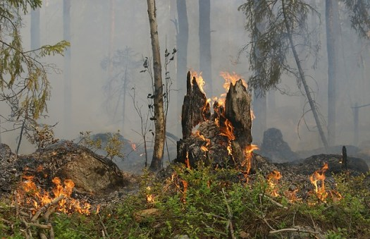 forest-fire-432877_640