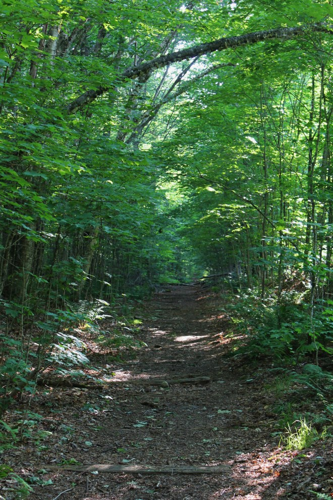 The never ending Lincoln Woods Trail