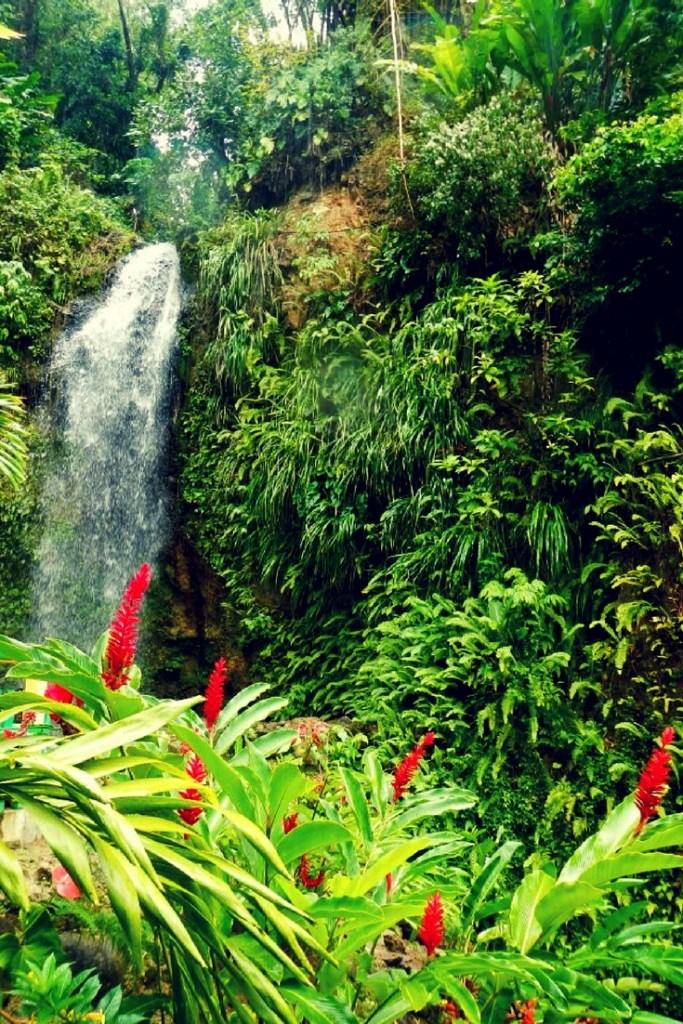 Waterfalls in St. Lucia are a dream come true!