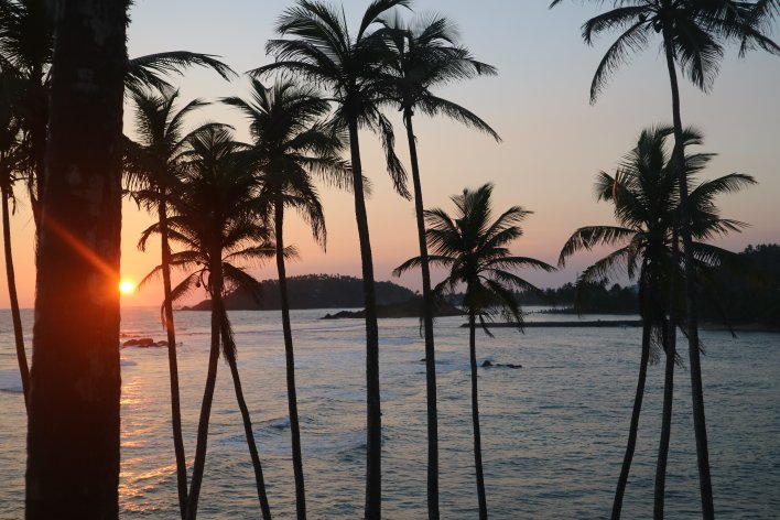 Complete guide to Sri Lanka 2019: Orange sun setting behind coconut palm trees over a calm Indian Ocean.