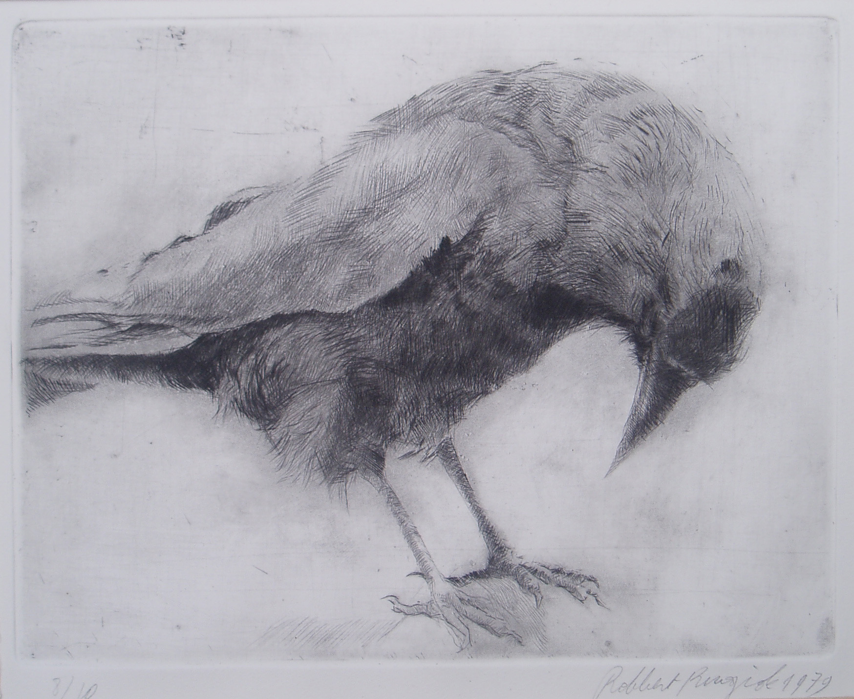 Robbert Ruigrok, 'Crow', 1979. Dry point.