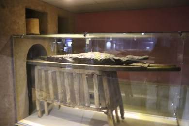 Mummified Crocodiles (1)