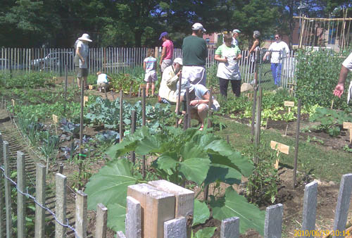 Another busy Saturday morning at the Learning Garden - June 19