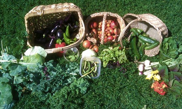 September 18 2010 harvest