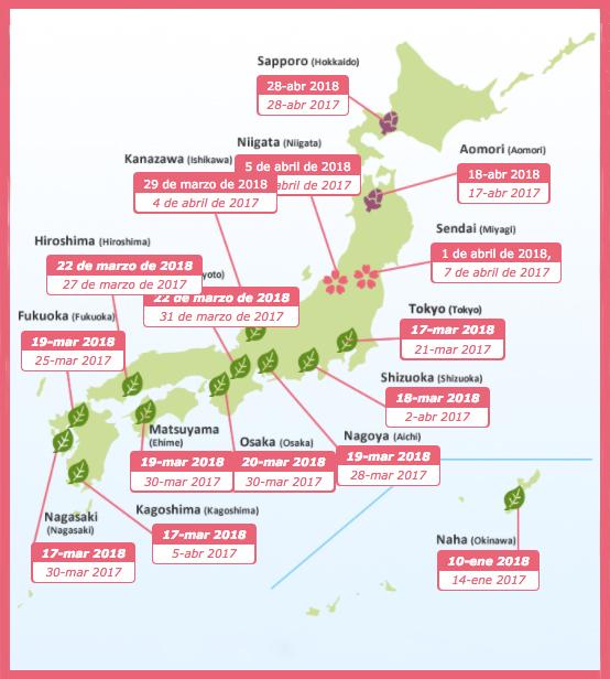 01 Japon - Esta es la última oportunidad para disfrutar de la flor de cerezo en Japón