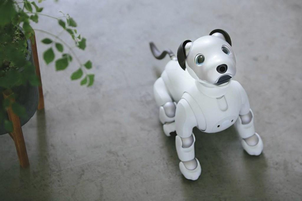 ¡Por fin! Aibo, el cachorro de Sony, ya puede ser tuyo por 55 mil pesos