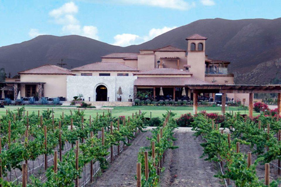 el cielo 1024x683 - Estos son los mejores viñedos mexicanos que no puedes perder de vista