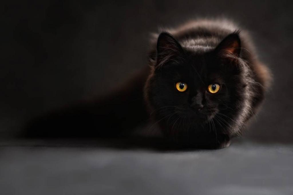 New Project 67 1024x683 - Conoce a los gatos más consentidos y millonarios del mundo