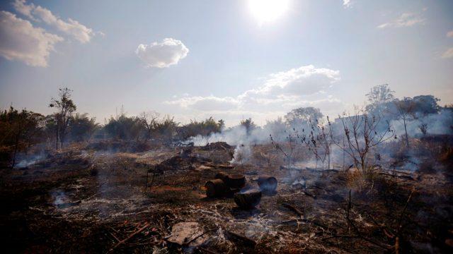 Cómo ayudar al Amazonas desde tu casa