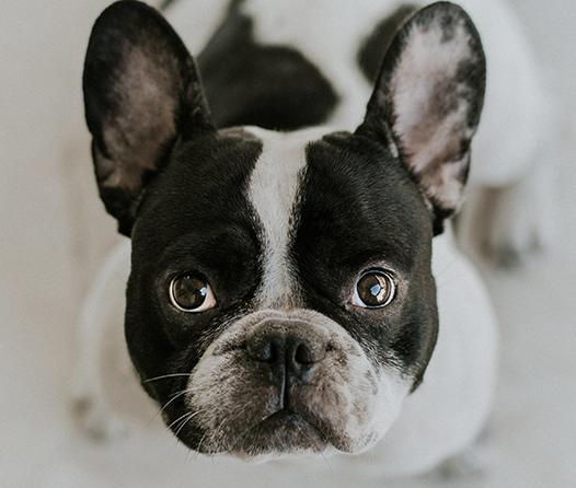 Consiente a tu perro esta temporada con un abrigo de lujo