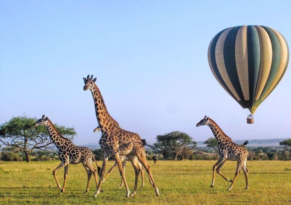 ¿Qué incluye el safari de Emirates que cuesta 2.5 mdp?