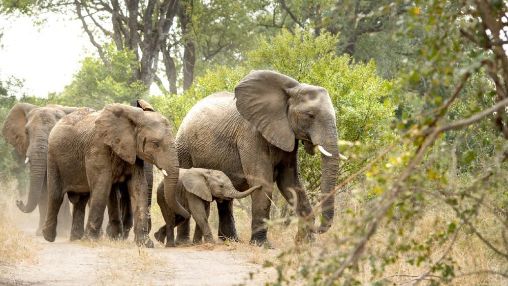 Vida salvaje a un clic de distancia: los mejores safaris llegan a tu computadora