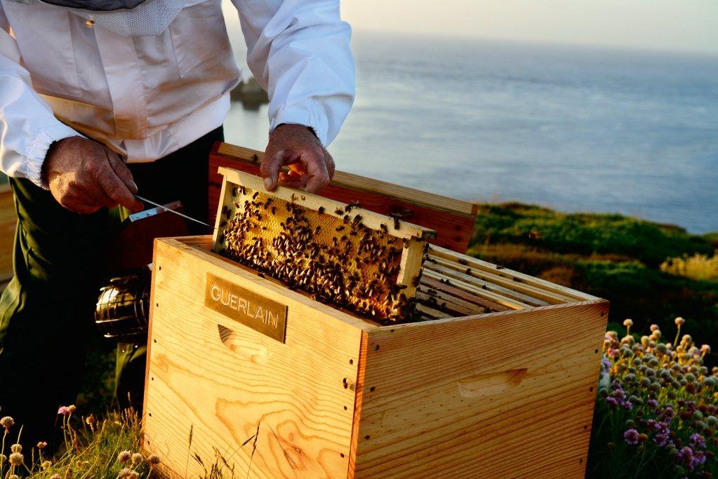El vínculo entre Guerlain y las abejas continúa con un compromiso para su preservación