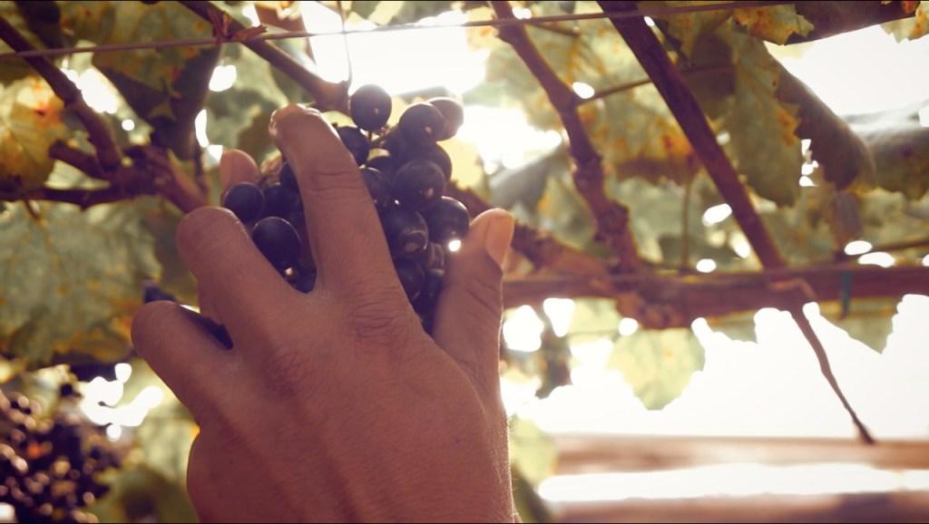 Bodegas Domecq  demuestra que los vinos mexicanos están más vivos que nunca