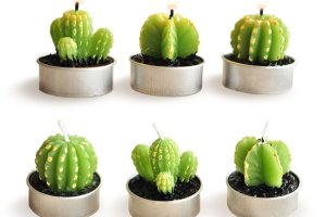 For the love of succulents - home decor