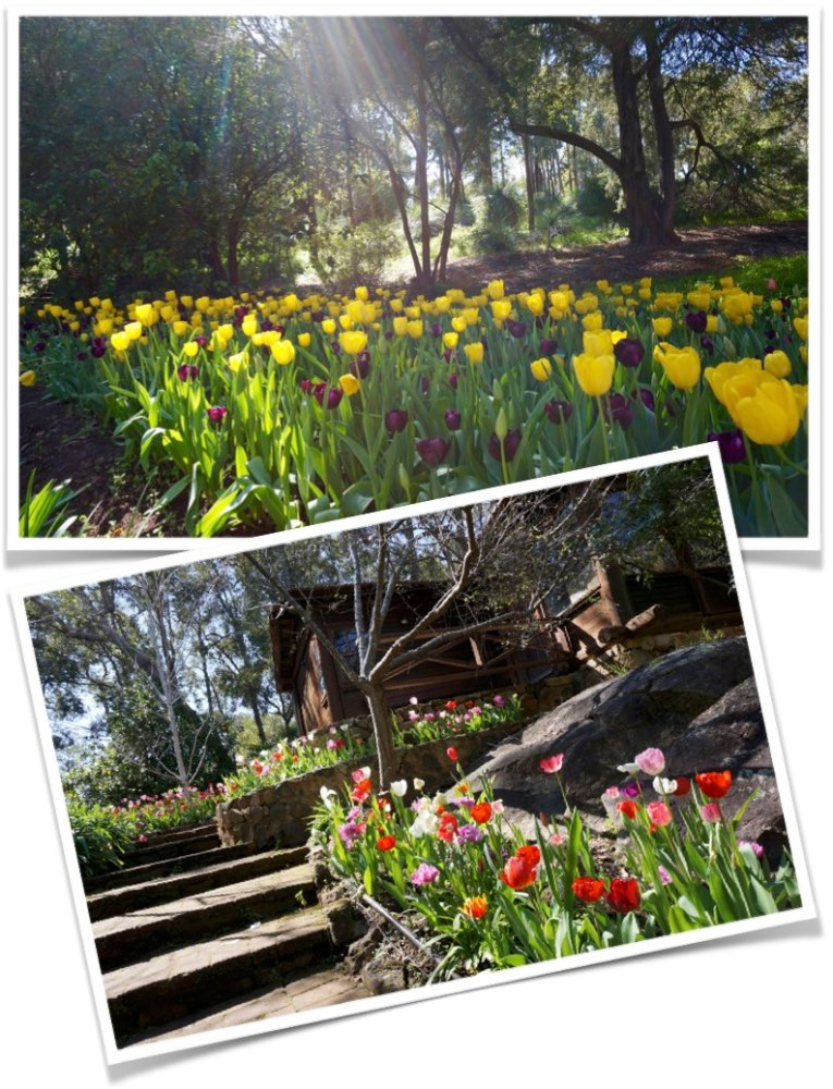 It's Spring in Perth (1/2)