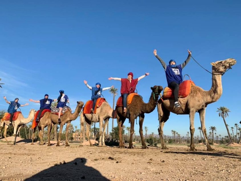 You can find a way to incorporate new animals into your travels, like we did while in Marrakech, Morocco