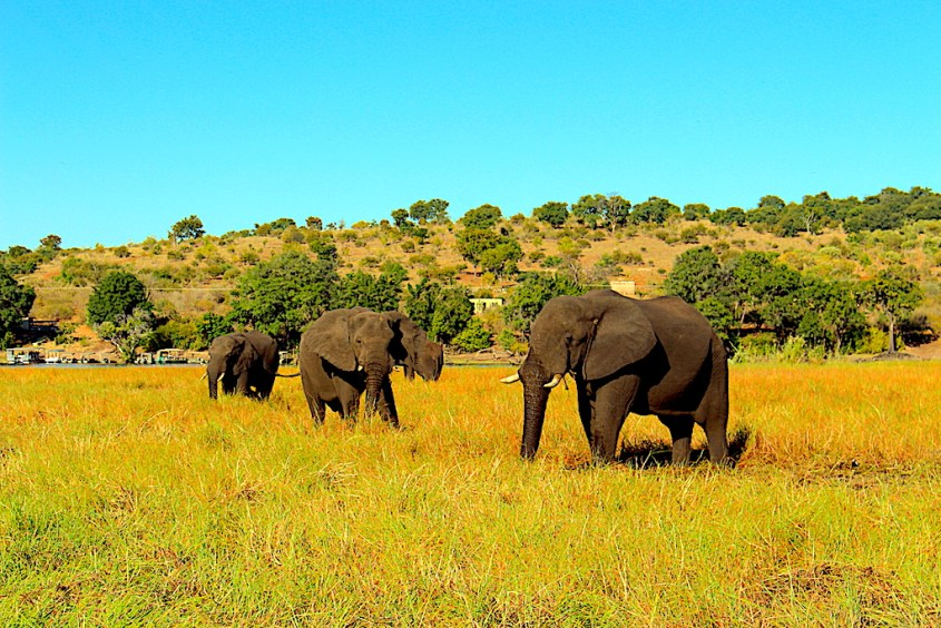 Elephants we spotted right away on our Chobe River Safari by G Adventures Africa
