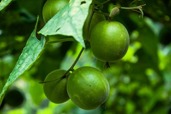 Monk Fruit Sweetener Amazon