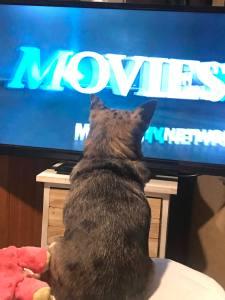 Glitzy, Movies, Pets